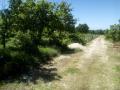 Poljoprivredno zemljište, Prodaja, Vodnjan, Gajana